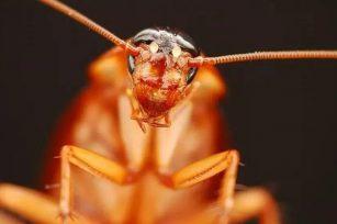 我和蟑螂30年的决斗