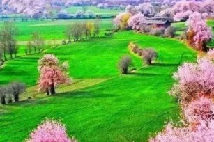 美丽的家乡