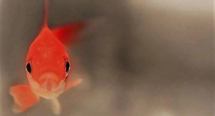 诗 | 鱼
