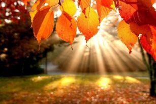 我看到了秋天的记忆,也听到了春天的呼唤