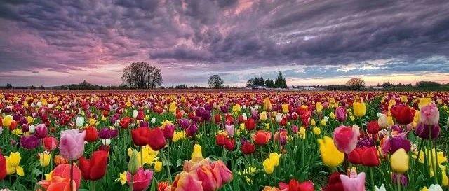 沉重的郁金香——世界帕金森日