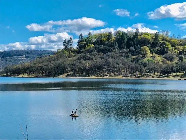 摄影   纳帕谷的春天